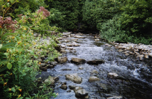 river rockwood